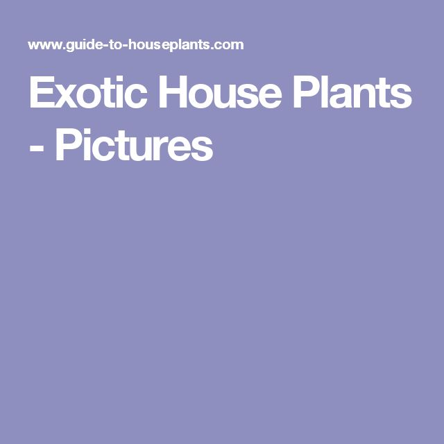 Exotic House Plants - Pictures
