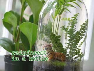 It's a rainforest terrarium made from an old soda bottle. Totally easy, totally crunchy and perfect for the classroom or for a kid's bedroom!  http://www.kionrightnow.com/story/19565895/create-a-soda-bottle-rainforest