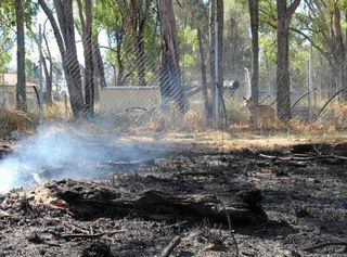 Dingo sanctuary brings reminder to maintain good fire practice on properties.