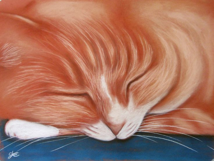Custom Pet Portraits, Puss Sleeping in Pastel by PastelPetPortraitsCo on Etsy