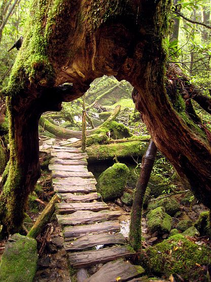 Shiratani Unsuikyo Ravine, Yakushima Island / Kagoshima Prefecture, Kyushu, Japan