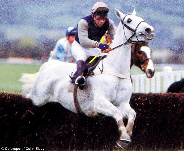 Desert Orchid was an equine superstar and caught the public's imagination like no other racehorse