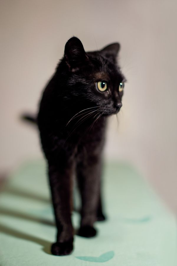 "photogenicfelines: "" (Michael Heinbuch) """