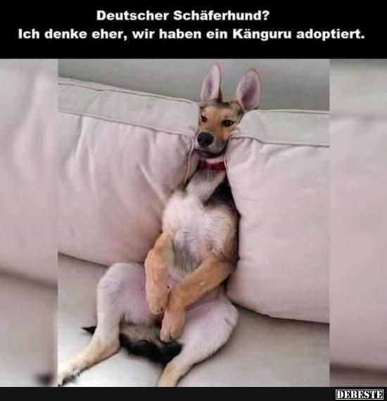 Besten Bilder, Videos und Sprüche und es kommen täglich neue lustige Facebook Bilder auf DEBESTE.DE. Hier werden täglich Witze und Sprüche gepostet! – Petra Steiner