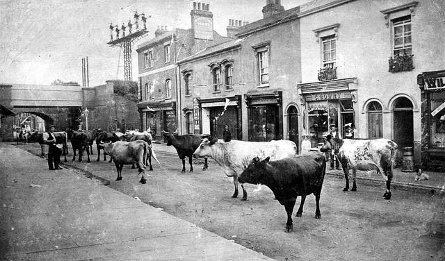 Cows Restaurant Liverpool Street