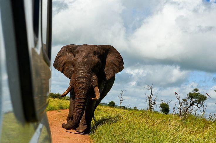 Kruger National Park South Africa http://geogypsytraveler.com/2014/10/27/top-favorite-national-park/