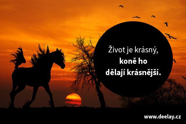 #citaty o koních v obraze. Zdroj: http://deelay.cz/citaty-o-konich-ktere-byste-meli-znat-obrazem/