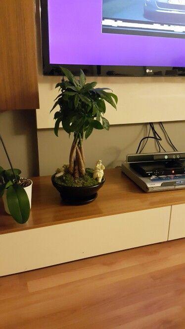 Para agaci bonsai