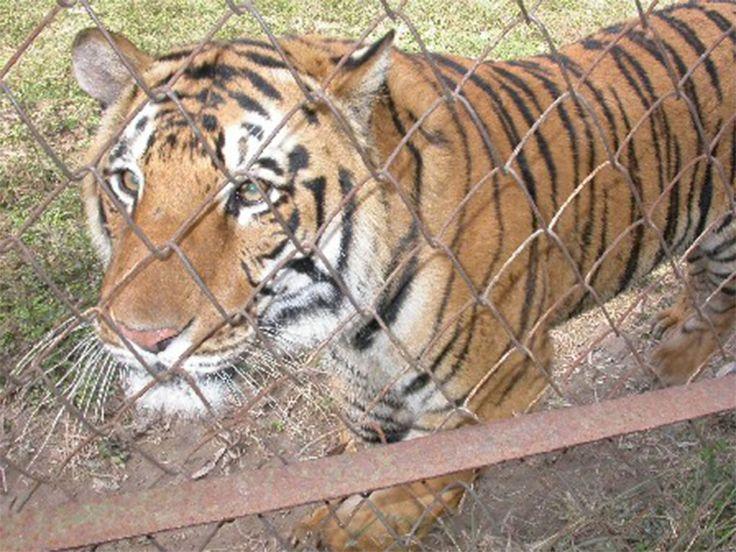 Animal Sanctuaries in Punjab, India @ Sanctuariesindia.com