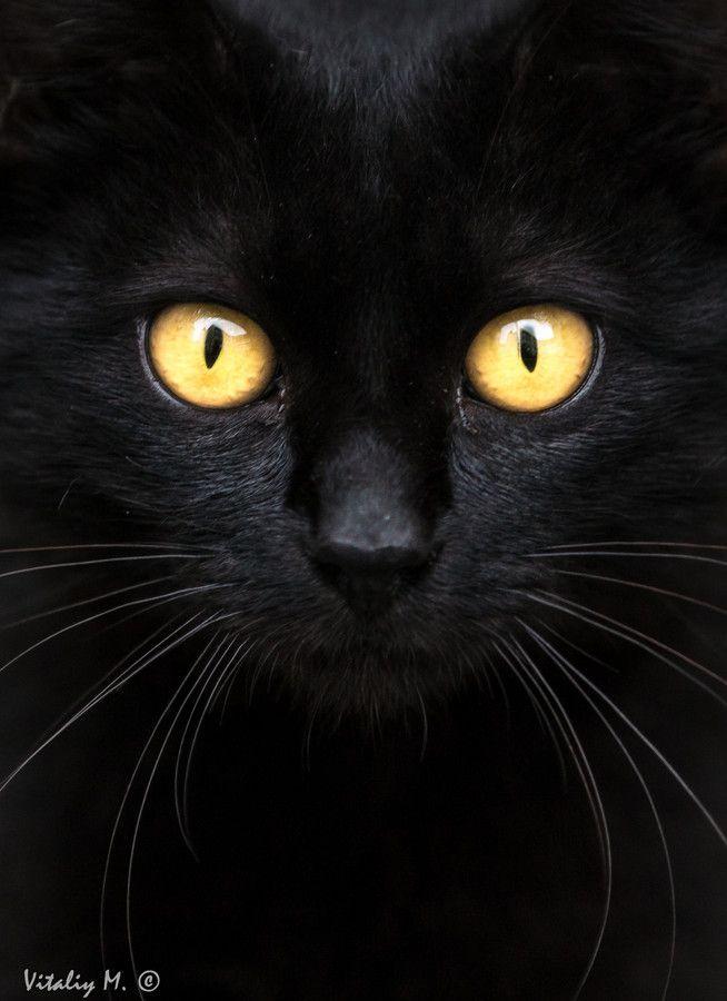Black cat by vitdance