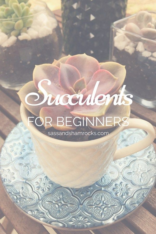 SUCCULENTS FOR BEGINNERS #Succulents #Gardening #HomeDecor