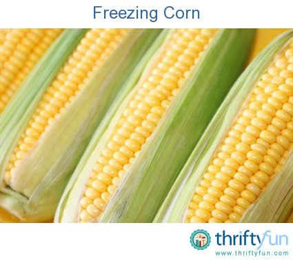 This is a guide about freezing corn. Whether you dealing with a bumper crop from your garden or there was a great deal at the super market, freezing your extra corn will ensure you have some to add to meals later when you need them.