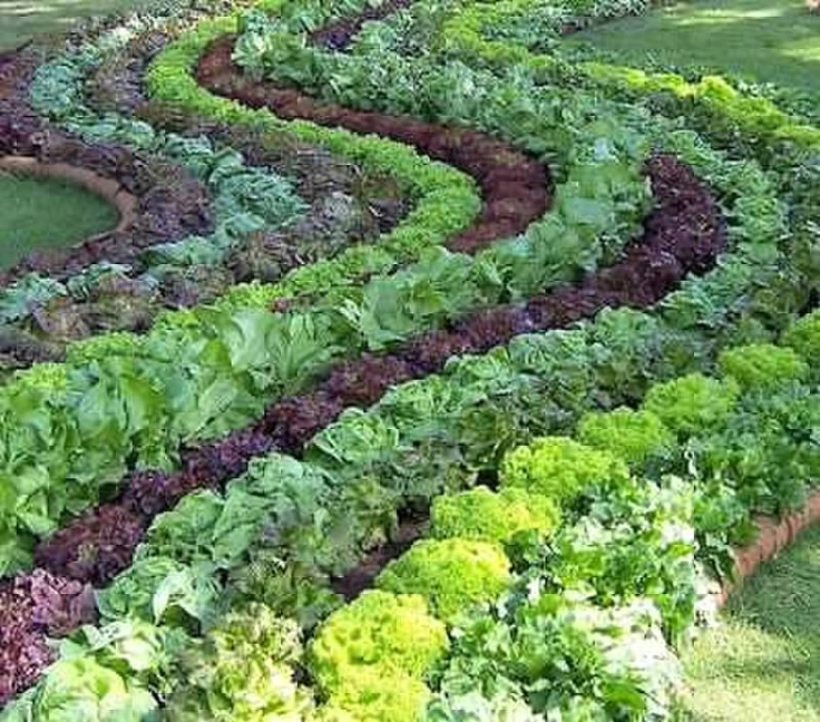 This isn't the most practical, but it's a nice visual design.  Could shrink it down to a few rows instead. Edible Landscaping