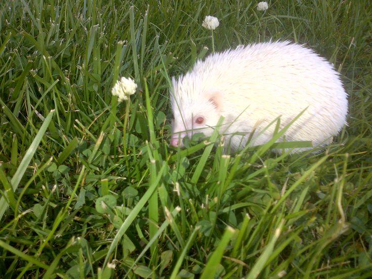 Clover flowers look like trees to tiny hedgehogs!