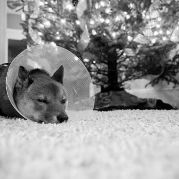 Cone of shame #OMGPuppies