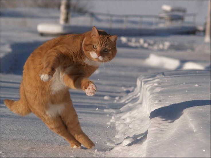 おもしろい猫の画像・写真-ズザーッ                                                                                                                                                                                 もっと見る