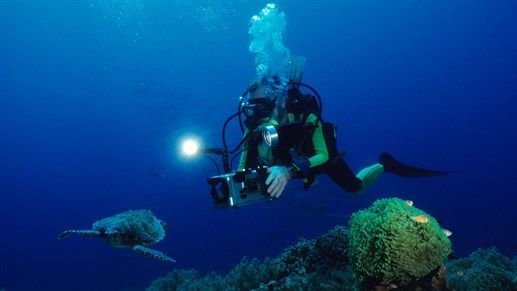 Diver filming turtle - Study wildlife photography and film making at University of West England #KILROY #studies #study