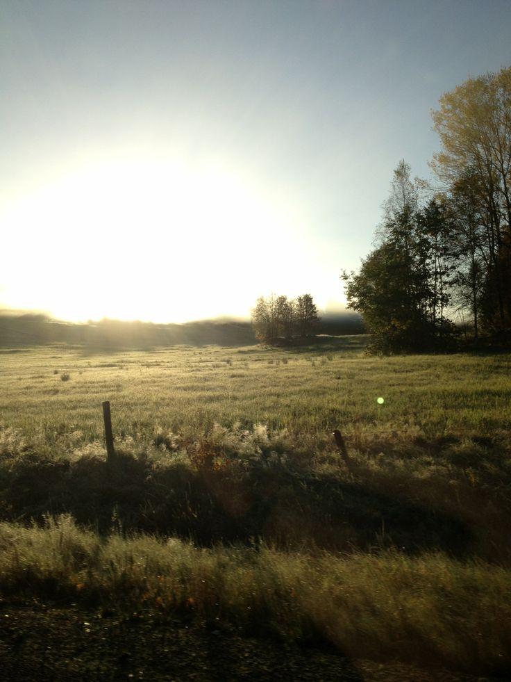 Frosty day photo: missaiv