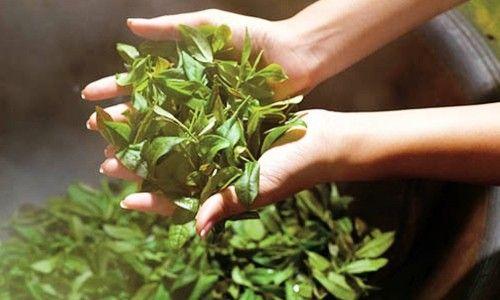 Κορυφαίο «super food» το πράσινο τσάι!