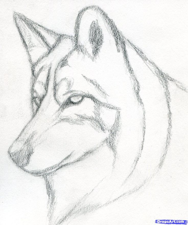 How To Draw A Wolf Head Mexican Wolf Step 3 Drawings Pinterest