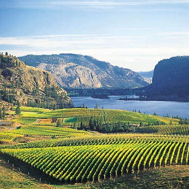 The stunning Okanagan Valley...one of my favourite places to be in the whole entire world. <3 Oliver and Kelowna...I miss you!