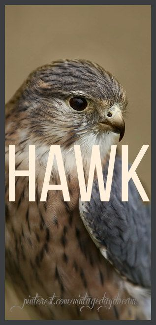 Baby Boy Name: Hawk. Meaning: Falcon. Denoting a keen eye, and sharp intellect. Origin: Old English. https://www.pinterest.com/vintagedaydream/baby-names-by-me-vintagedaydream/