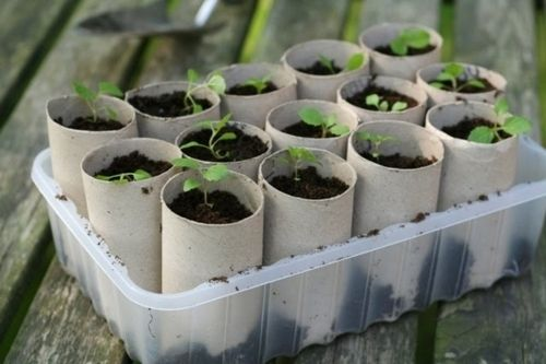 Use toilet paper rolls to start your plants. When ready to plant, stick the whole roll in the ground. The roll will decompose. in things to remember ^^