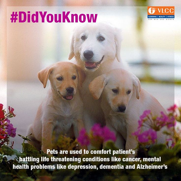 #DidYouKnow: Pets do more than provide unconditional love.  Dogs are more commonly used as therapy animals. The therapy is also beneficial for kids with physical and mental disabilities like cerebral palsy, dyslexia and autism.