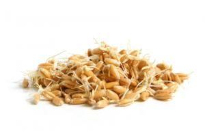 Cuáles son los beneficios del germen de trigo