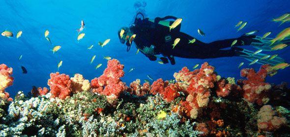 Scuba Diving in Quirimbas Archipelago.