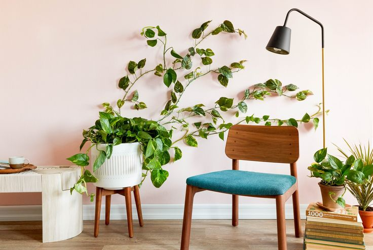 11 Easy Ways To Make Your Rental Bathroom Look Stylish: 25+ Best Ideas About Pothos Vine On Pinterest