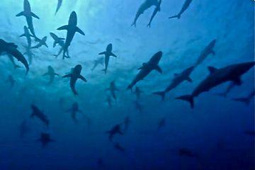 35 surprising facts about sharks - Matador Network