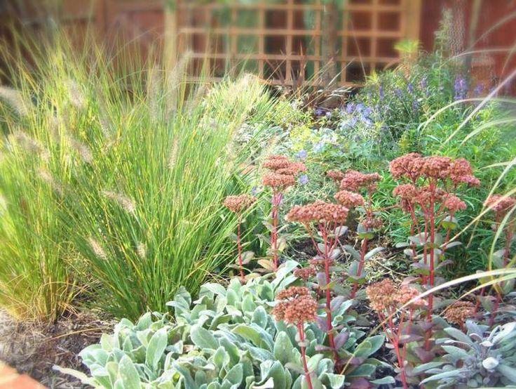 entretien de jardin facile conseils pour les jardiniers amateurs