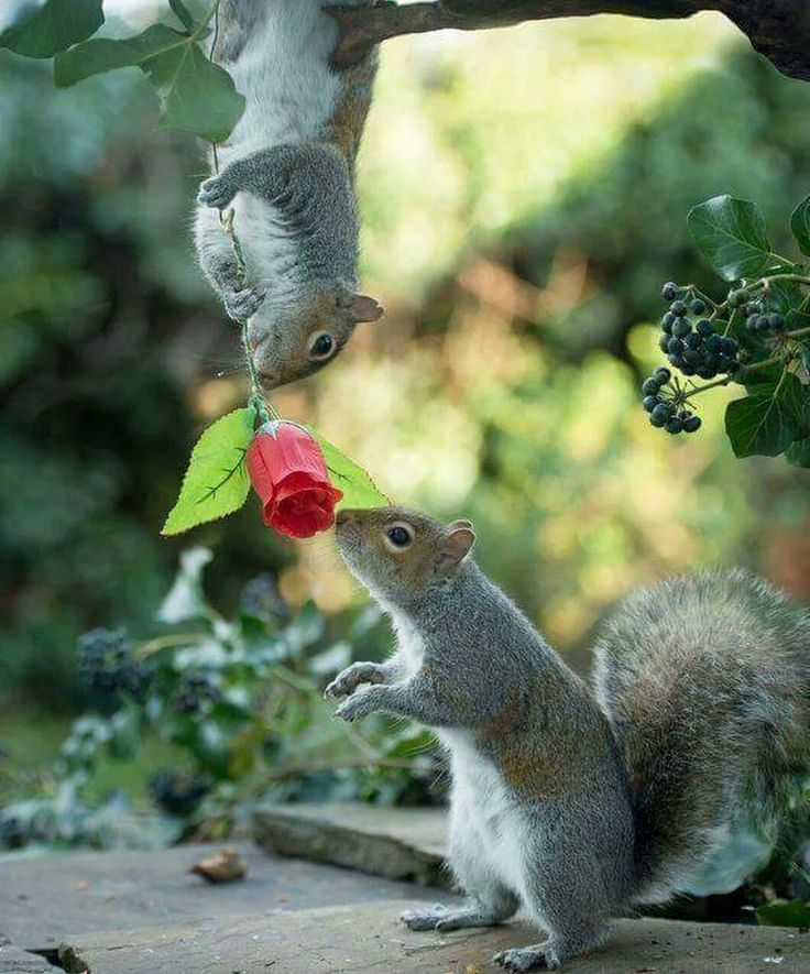 Best SQUIRRELS Images On Pinterest Squirrels Funny Squirrel - Student befriends campus squirrels then dresses them in the cutest outfits ever