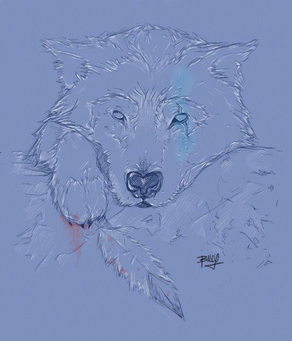 Wolf done in SAI