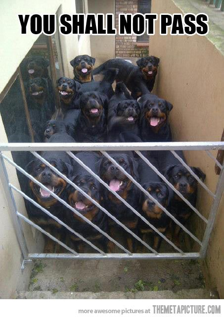 Without being licked.....rotties!