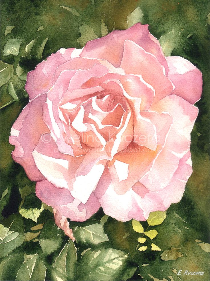 Rose, A4.  #watercolor #art #painting #pinkrose #rose #flower #sunny #green #nature #garden #illustration #ewelinakuczera