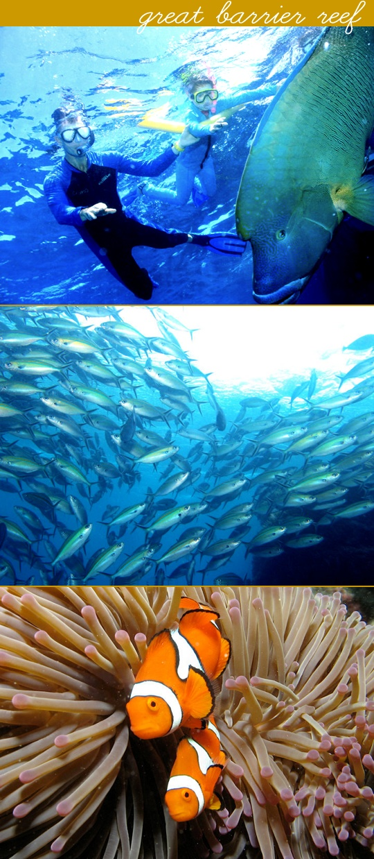 Snorkeling the Great Barrier Reef, Australia.  Probably the most amazing adventure of my life.
