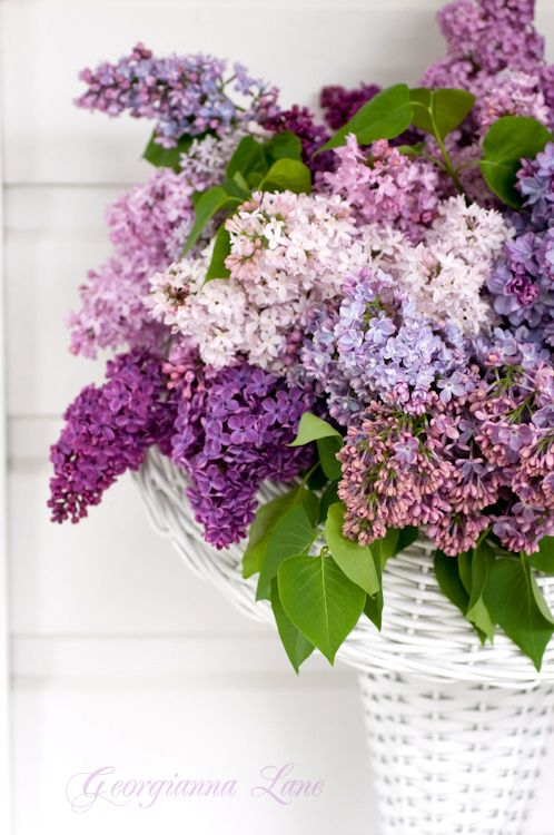 #Basket of lovely, #Lilacs
