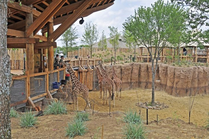 Giants of the Savanna, Dallas Zoo, Dallas, Texas, USA by CLR design