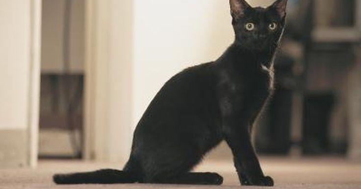 Cómo quitar la orina de gato de una alfombra para siempre. Es posible que tu gato haya tenido un accidente en una alfombra debido a una enfermedad o a la conducta de marcado territorial. Los gatos dejan un charco de orina que llega hasta abajo de la alfombra y es posible que vuelvan a marcar el área debido al olor que queda. La orina de gato contiene químicos que expiden un olor fuerte y desagradable. ...
