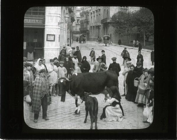 Cow delivering milk, Valencia, Spain | saskhistoryonline.ca