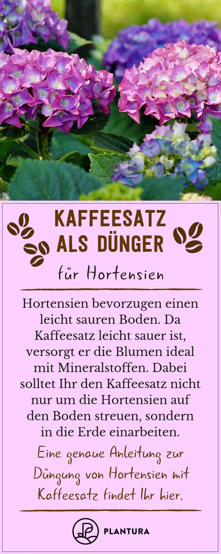 Kaffeesatz als Dünger: Verwendung & Vorteile des Hausmittels – Plantura | Garten Ideen & Tipps | Gemüse, Obst, Kräuter