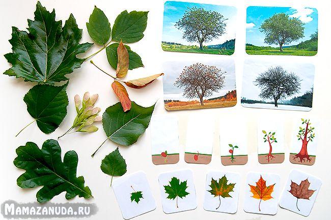 Конспект занятий и комплект заданий для первого знакомства с деревьями для детей от 3 лет
