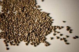 ¿Qué propiedades tienen las semillas de cáñamo como comida? - VeoVerde