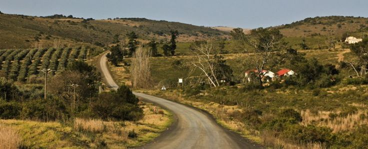 If you drive the 'wildlife way' from Port Elizabeth to Grahamstown, you can experience elephants, olives, some golf and a walk in the bush.
