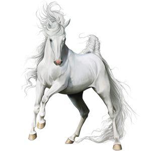 Maximus, Pferd Englisches Vollblut Hellgrau #16207414 - Howrse