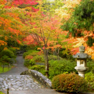176 best Japanese Gardens images on Pinterest Japanese gardens