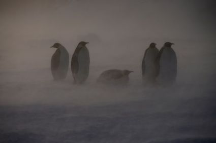 En Antarctique, les vents inhiberont l'élévation du niveau de la mer