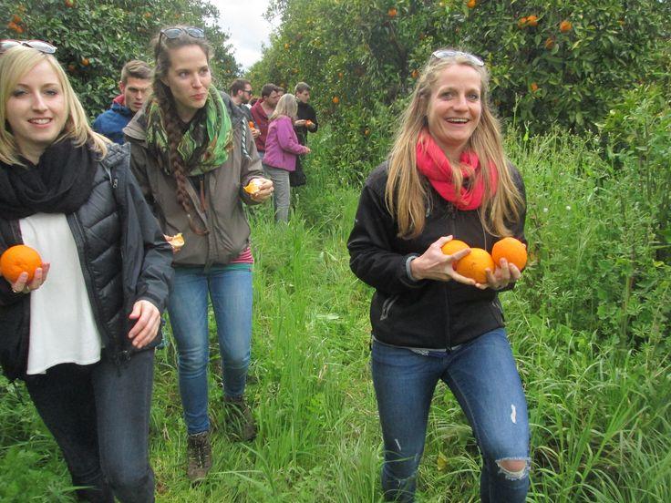 Naranjas ecológicas del Valle del Guadalquivir